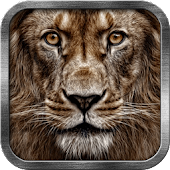 3D Lion Live Wallpaper