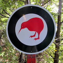 Photo: Aamupäivän retkikohteena pieni luonnonpuisto, jossa oli myös  oikeita kiivilintuja