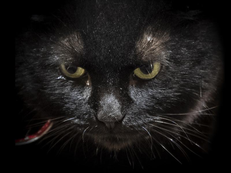 Gatto nero ! di giampieropetrone