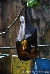 Bat in Asia @ Animal Kingdom