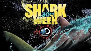Shark Week Breakthroughs thumbnail