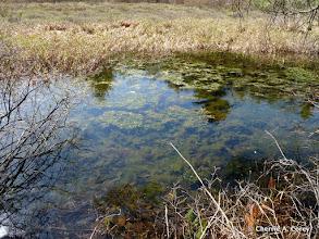 Photo: Spring algae bloom
