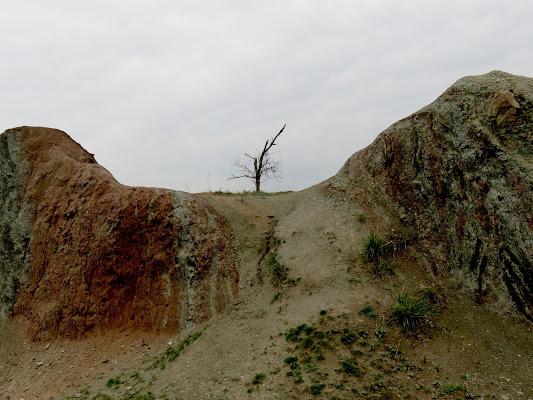 resto di albero fulminato di mariellaturlon