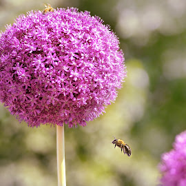 Globe Drawing Bees by Sandra Hilton Wagner - Flowers Single Flower ( globe, bee, round, nature, single flower, purple, flower,  )