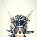 Avatar dead fly