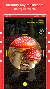 Mushroom Identification Screenshot