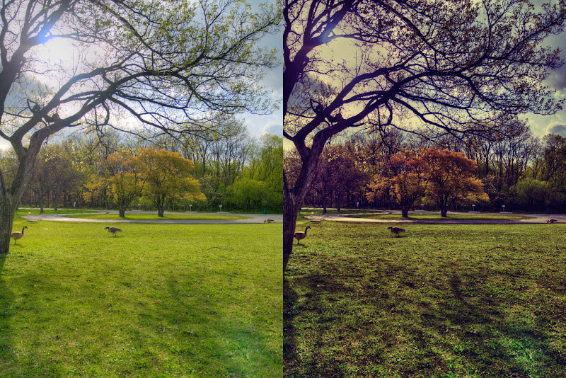 Photo: Summer / Fall