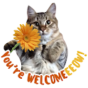 Cat Stickers WAStickerApps cat memes funny icon