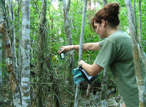 Photo: Laura van B. Stafford photographing Ghost Orchids - Dendrophylax fawcettii.  July 14, 2009