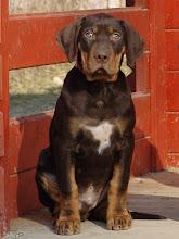 Photo: Arlington psík / male