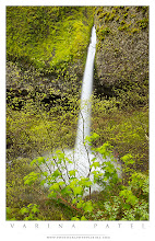 Photo: 5 minutes a day  #photographydiscussion   #naturephotography   Ponytail Falls, Columbia River Gorge - Oregon, USA  How much time do you spend in post-processing on a regular basis? Business and family responsibilities make it tough to find the time... but I'm trying!  Over the past few years, I found myself struggling to find time for post-processing. I never had a back-log of unprocessed photographs before... but now I find myself mired in images that are begging for attention. Where did all my time go? Well. I never had a whole lot of time to begin with. So that's part of the problem. And now, on top of all my other responsibilities, I'm running a thriving business. The demands are time-consuming and never-ending. There never seems to be a moment when I can just stop and take a few minutes to open up a file and get to work.  So, I've decided to start a new habit. Every morning when I boot up my computer, I open up Adobe Bridge. I leave it open as a visual reminder so that sometime during the day, I will grab an image and put a few minutes of work into it. My goal is to spend 5 minutes a day in post-processing. For now. Just a few minutes on any photograph from my most recent trip. And that's it. It doesn't sound like much... but in the past two days, I've finished one image that had been sitting on the sidelines for a while... and I processed this one from start to finish. That's not half bad! And it's two more files than I would have completed if I hadn't set a goal for myself. Some photos will take more than 5 minutes - but that's what the save button is for. Some days I won't be able to put in more than 5 minutes... but some days maybe I'll be able to spend a little extra time.  I could fill every minute of every day with business responsibilities. But I think I can manage to wedge in 5 minutes of post-processing if I put my mind to it. Don't you think?  Last time we visited Columbia River Gorge, +Jay Patel met up with +Brian Matiash, +Nicole S. Young, +Patricia Davidson, and +Michael Riffle. What a fantastic group of photographers! That's what I love about Google+. I've met so many incredible people in real life after getting to know them online. I've been in online photography forums for years - posting, commenting, moderating - and yet, I met just one or two people face-to-face. Something about Google+ - the incredible sense of community, the interface that encourages long discussions, the easy-to-manage circles - builds connections like no other social forum I've joined. It's great! Anyway... we all got along famously, and I had way too much fun. Can't wait to do it again. :)