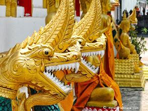 Photo: Golden Dragon Heads
