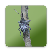 App Icon for Camellia Pest ID App in Czech Republic Google Play Store