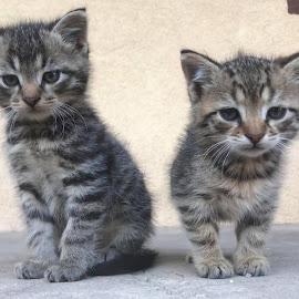 Dali i Vini by Tatjana Petric - Animals - Cats Kittens ( salvador, cuteness, vincent, kittens, sleepy )