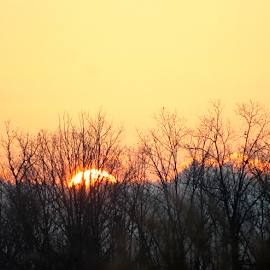 Sunst and Forest by Leah Zisserson - Landscapes Sunsets & Sunrises ( sky, orange, sunset, weather, yellow, virginia,  )