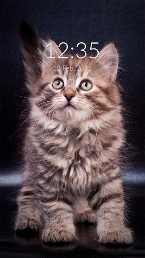 Fluffy Tiger Cat Wall Lock