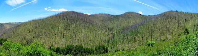 Burned ridge south of Mill Canyon