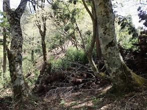 ここも倒木で迂回