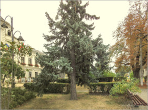 Photo: Turda - Piaţa 1 Decembrie 1918 - parc - 2019.09.24