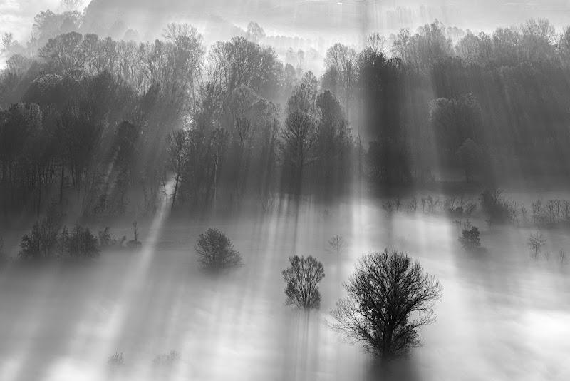 Raggi di luce tra gli alberi di Aktarus