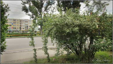 Photo: 2016.06.04 - de pe Calea Victoriei, zona bisericii din Mr.3