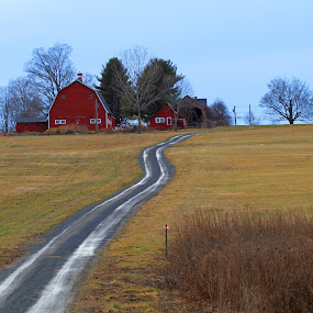 Country Road by Steve Shelasky - Landscapes Prairies, Meadows & Fields ( field, farm, winding road, road, landscape, rural,  )