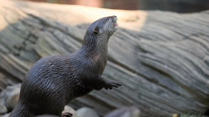 Bindi & the Otters thumbnail