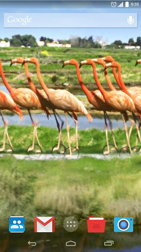Flamingos Bicycle Live Wallpap