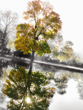 Photo: Autumn tree reflected in a lake at Eastwood Park in Dayton, Ohio.