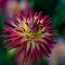 IMG_7796-1pix.jpg