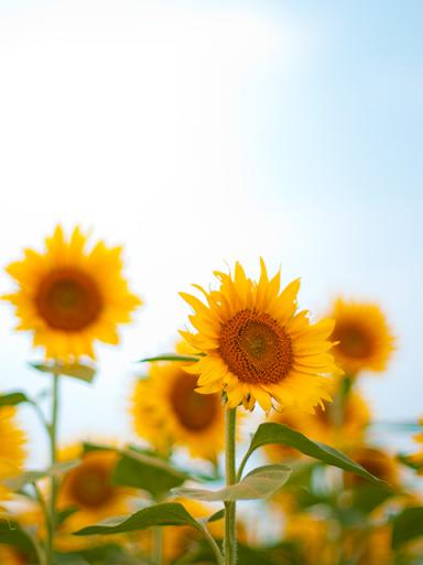 Landscapes of the flower 1.1 Windows u7528 3