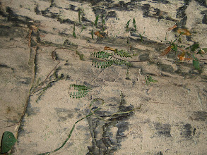 Photo: Sand and plants on the stone plate beside a creek