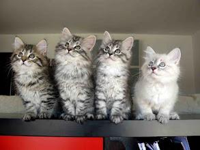 Photo: Los cuatro (2 meses) Quenzo, Pluma (Quenya), Quimey y Quinlan