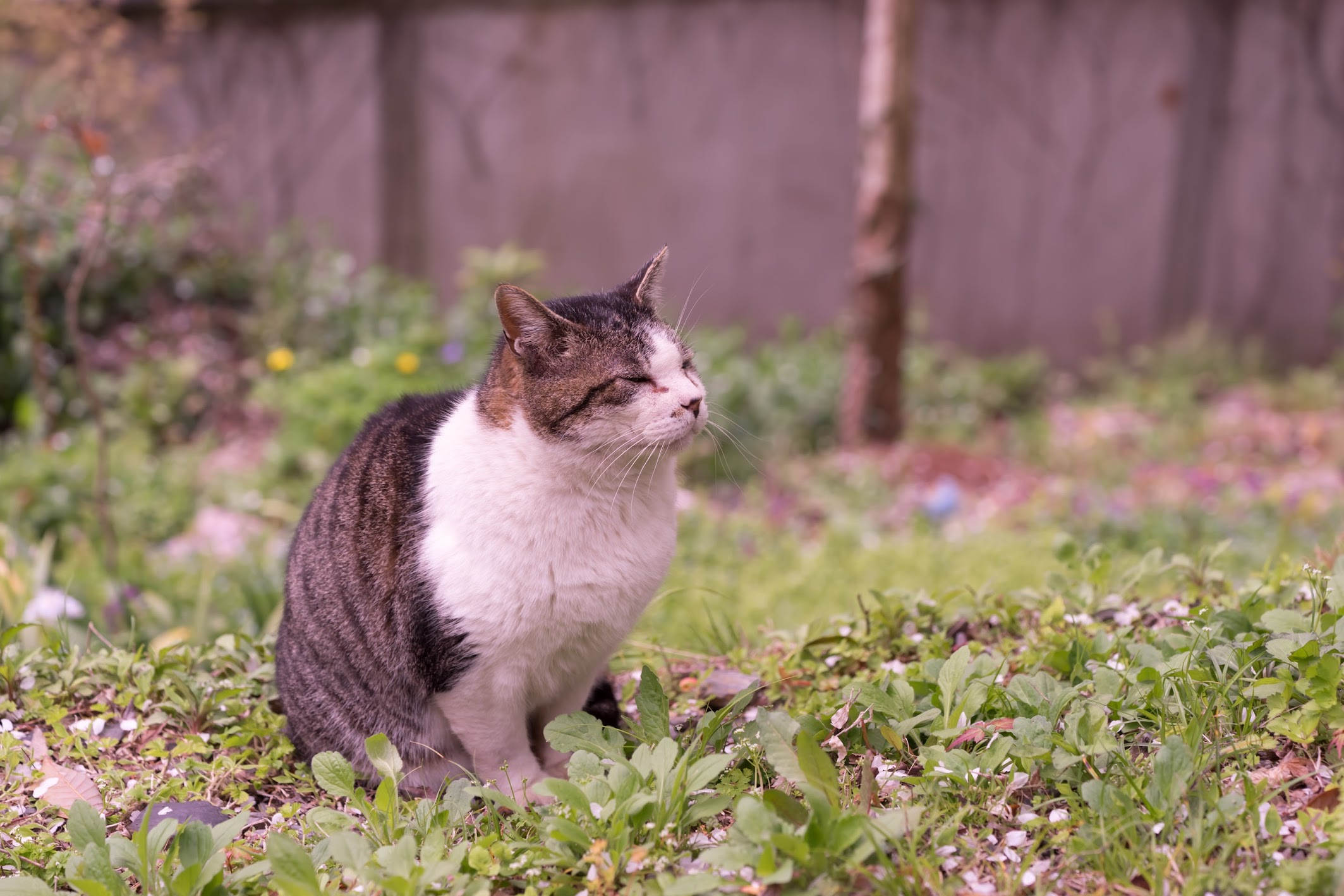京都 哲学の道 猫1