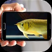 Arowana Fish 3D LiveWallpapaer