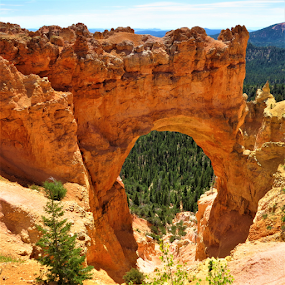 Bryce Arch by Hal Gonzales - Landscapes Caves & Formations ( national park, bryce canyon, rock formation, arch, landscape,  )