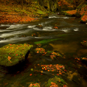 river Kamenice by Pavel Klučar - Nature Up Close Water