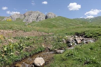 Creek runs through a meadow.