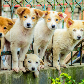 Family Photos by Kriswanto Ginting's - Animals - Dogs Puppies ( puppies, dogs, dog portrait, dog playing, puppy, dog portraits, dog, puppy portrait,  )