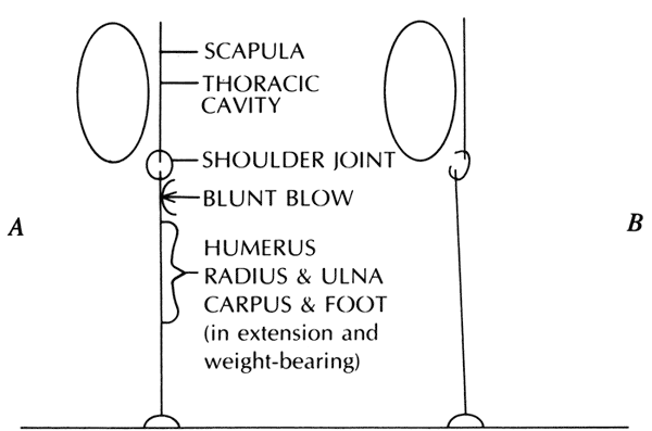 A and B, Schematic drawings of an animal seen in an anteroposterior view