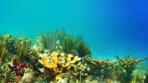 Habitats: The Key to Florida's Fisheries thumbnail
