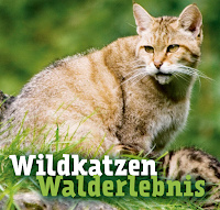 Wildkatzenwalderlebnis