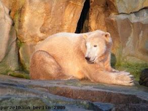 Photo: Knut nimmt ein Sonnenbad :-)