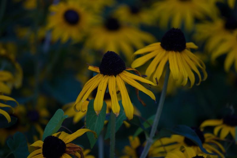 fiori di vivancove84