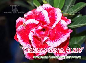 Photo: Crismas Santa Claus