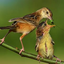 Loving Mom by Leovin Agustim - Animals Birds (  )