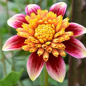 by Tesla Levine - Flowers Single Flower