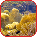 Coralreef Cool Wallpapers icon