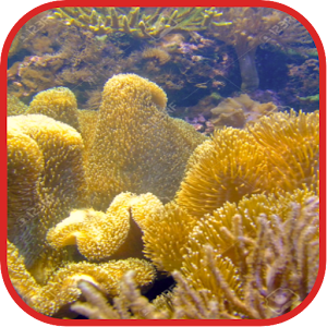 Coralreef Cool Wallpapers download