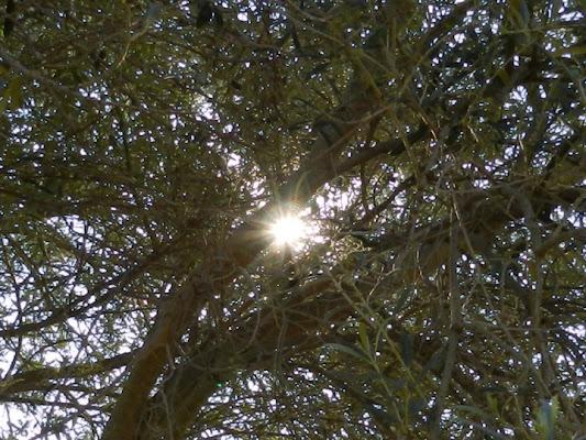 Il sole intruso nell'alberto... di gabrigabri